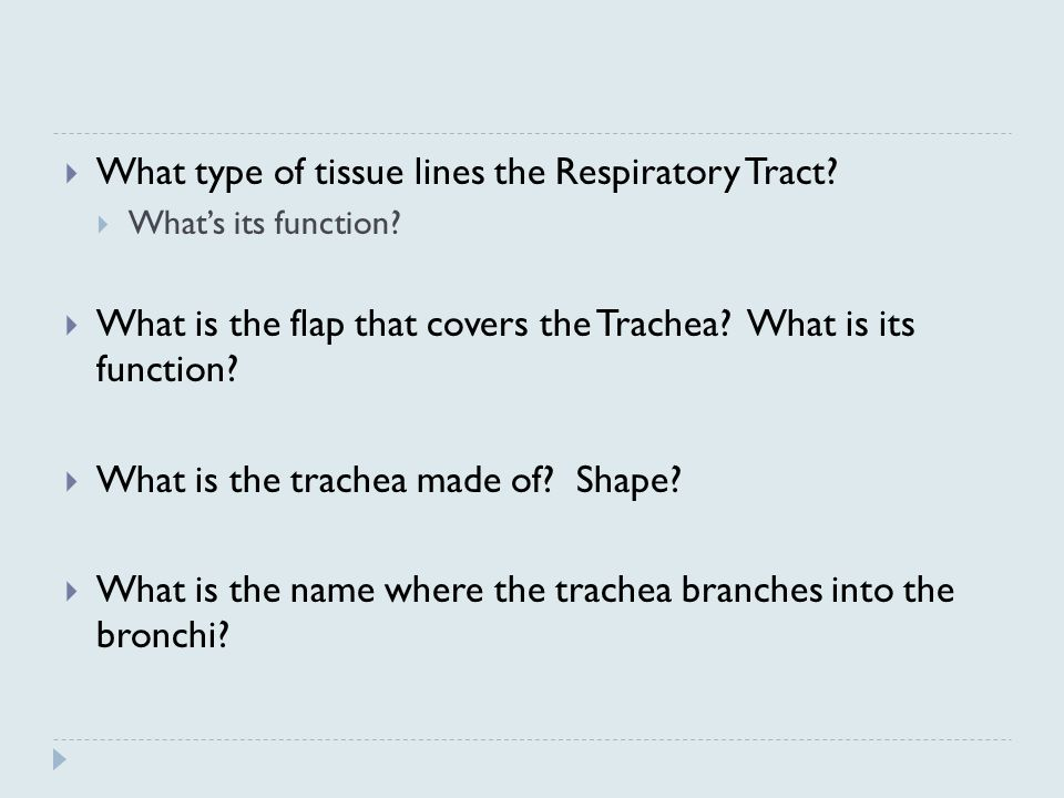 What type of tissue lines the Respiratory Tract