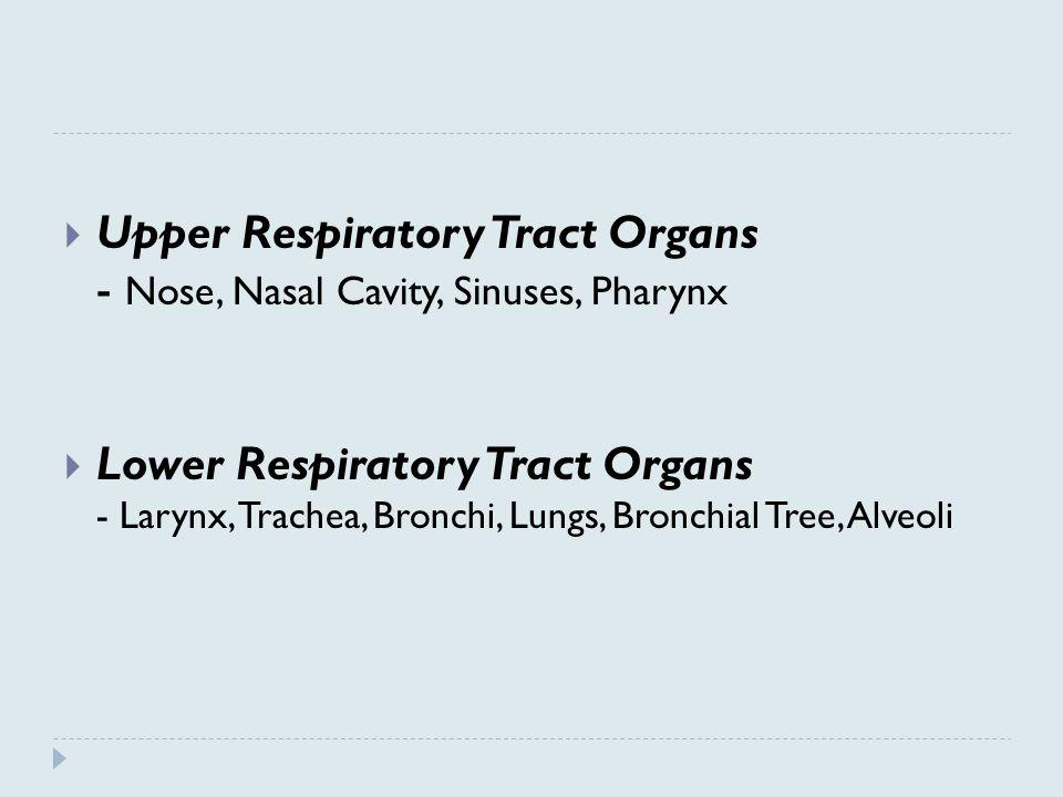 Upper Respiratory Tract Organs - Nose, Nasal Cavity, Sinuses, Pharynx