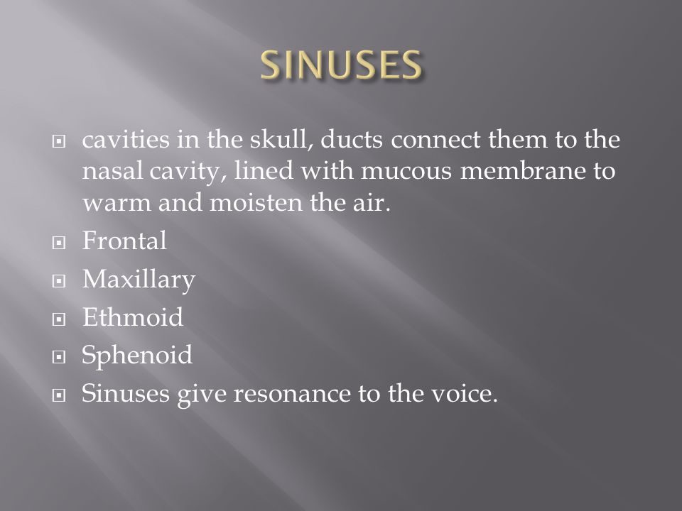 SINUSES cavities in the skull, ducts connect them to the nasal cavity, lined with mucous membrane to warm and moisten the air.