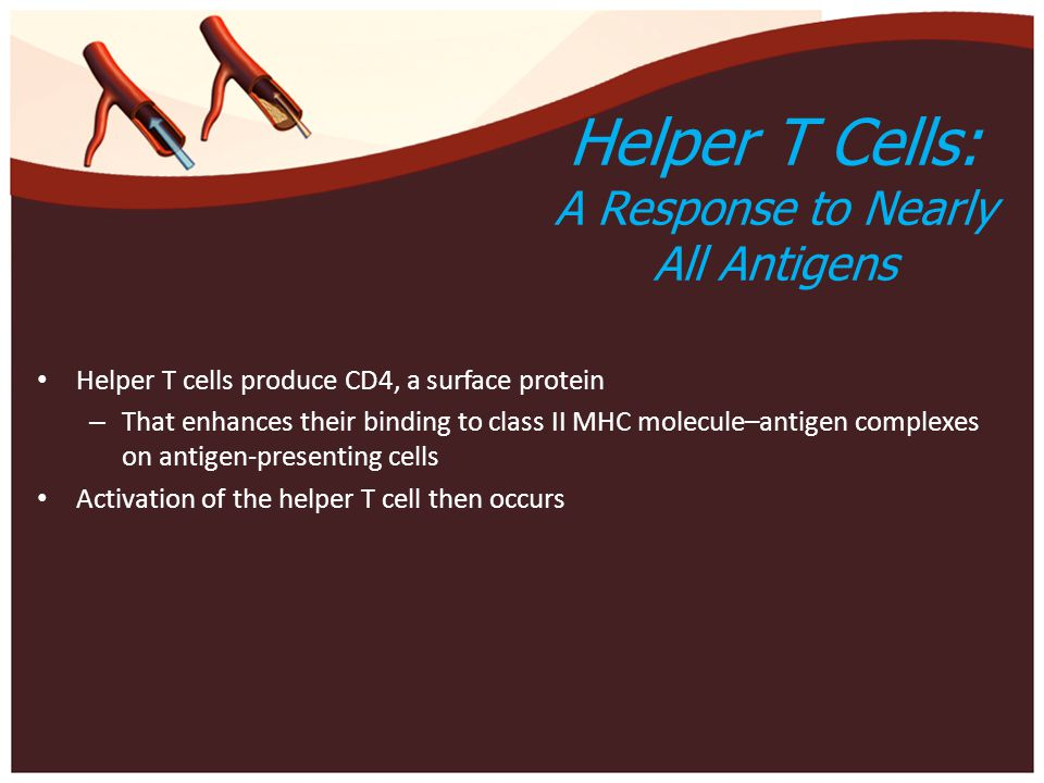 Helper T Cells: A Response to Nearly All Antigens