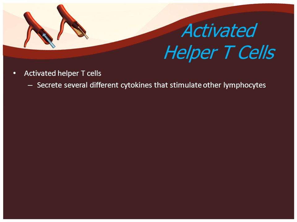 Activated Helper T Cells