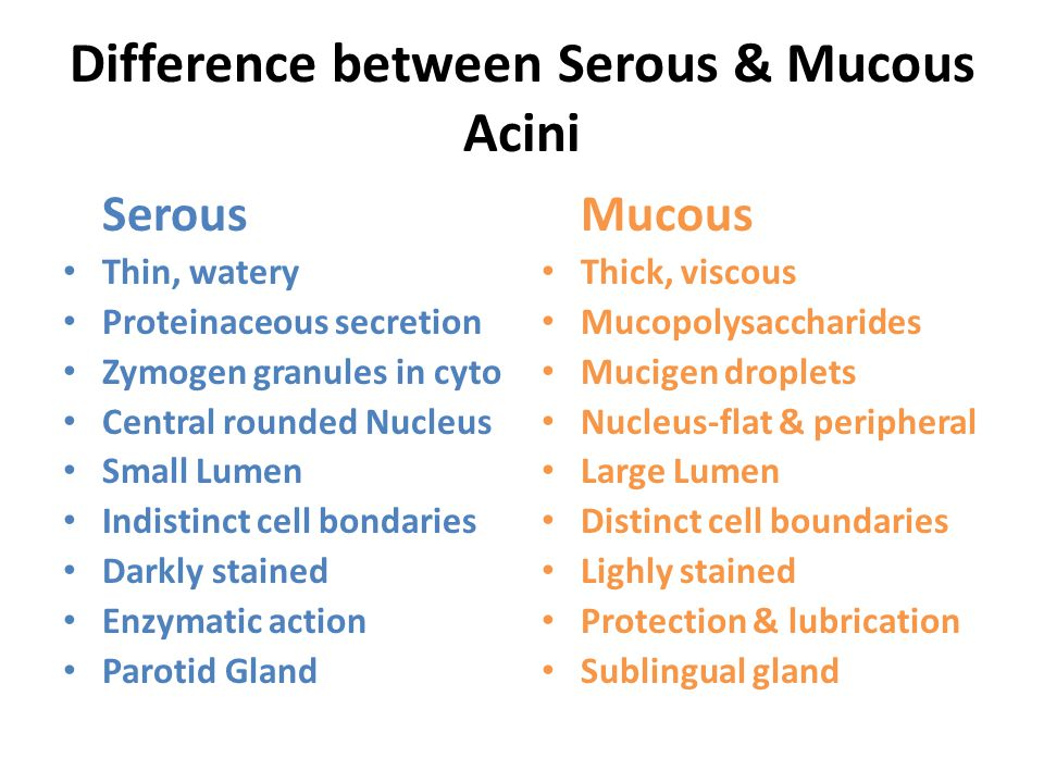 Difference between Serous & Mucous Acini
