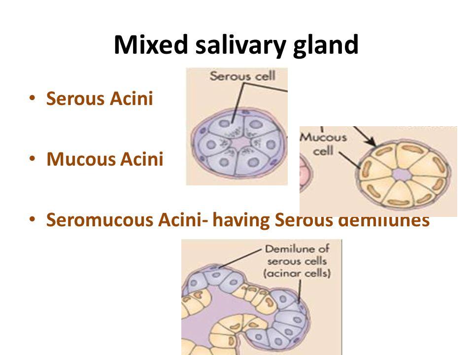 Mixed salivary gland Serous Acini Mucous Acini