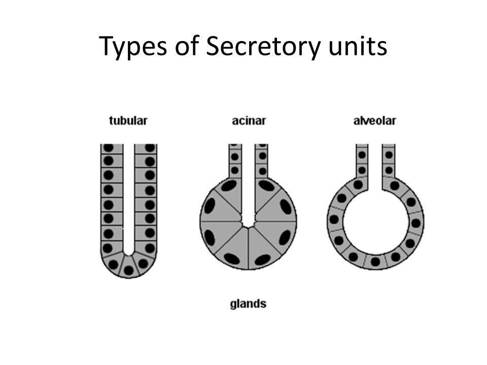 Types of Secretory units