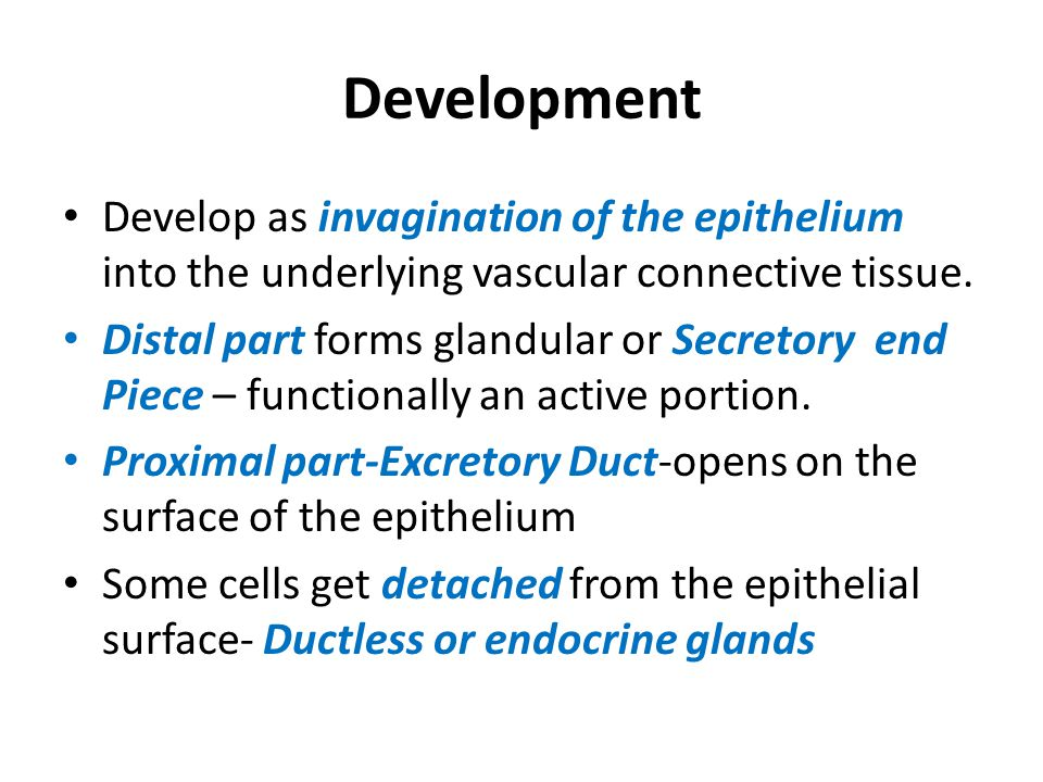Development Develop as invagination of the epithelium into the underlying vascular connective tissue.