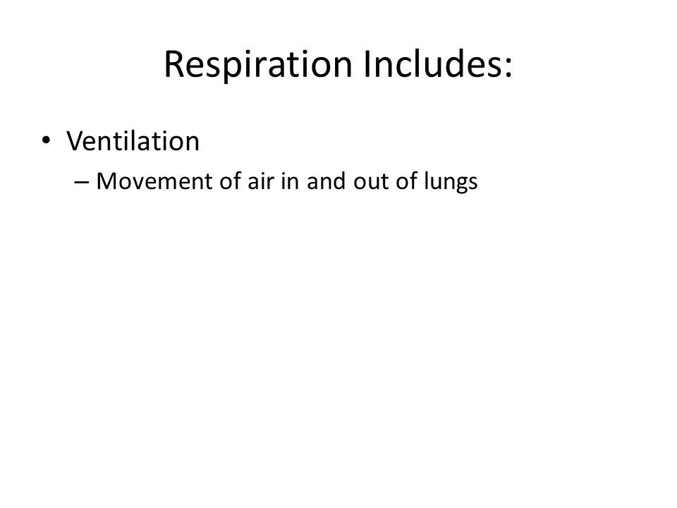 Respiration Includes:
