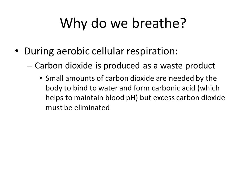 Why do we breathe During aerobic cellular respiration:
