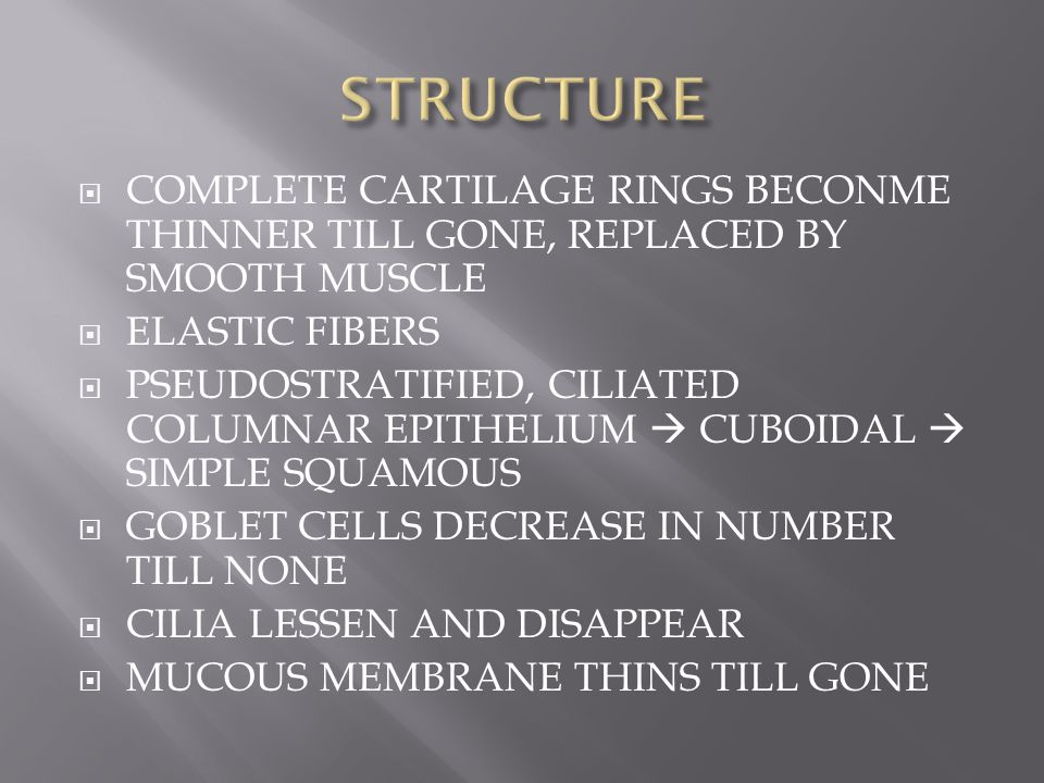 STRUCTURE COMPLETE CARTILAGE RINGS BECONME THINNER TILL GONE, REPLACED BY SMOOTH MUSCLE. ELASTIC FIBERS.