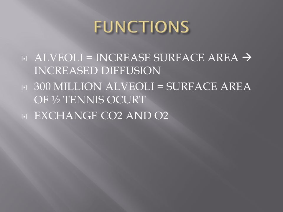 FUNCTIONS ALVEOLI = INCREASE SURFACE AREA  INCREASED DIFFUSION