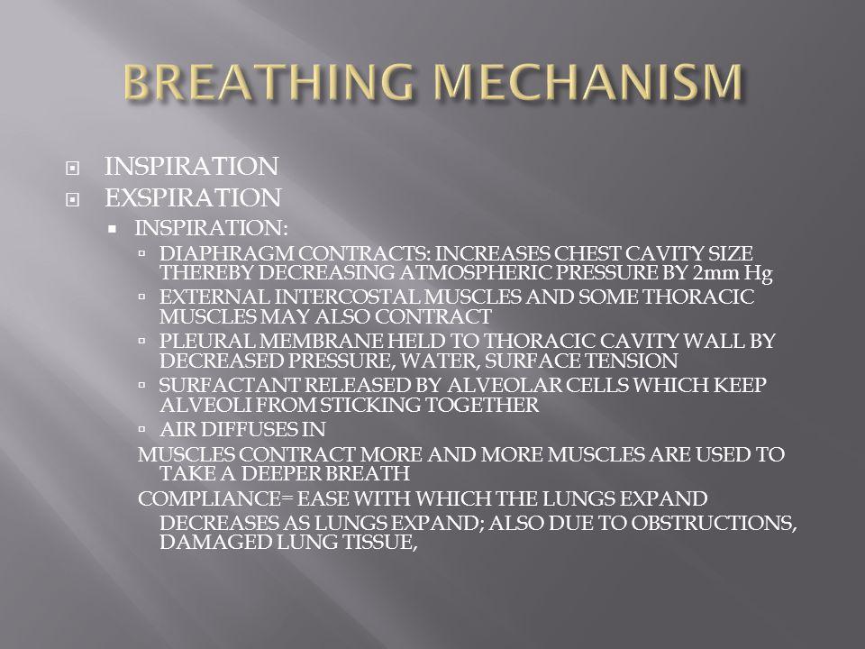 BREATHING MECHANISM INSPIRATION EXSPIRATION INSPIRATION: