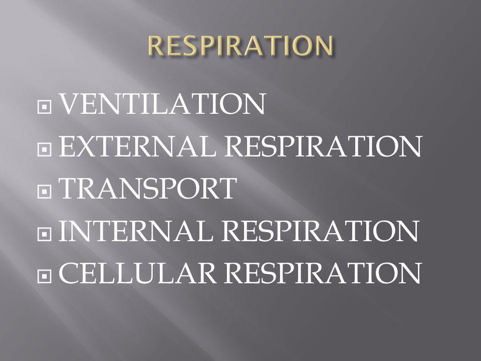 VENTILATION EXTERNAL RESPIRATION TRANSPORT INTERNAL RESPIRATION