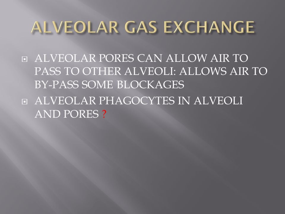 ALVEOLAR GAS EXCHANGE ALVEOLAR PORES CAN ALLOW AIR TO PASS TO OTHER ALVEOLI: ALLOWS AIR TO BY-PASS SOME BLOCKAGES.