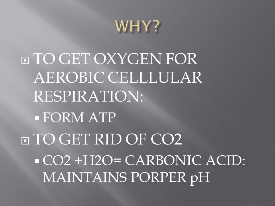 TO GET OXYGEN FOR AEROBIC CELLLULAR RESPIRATION: