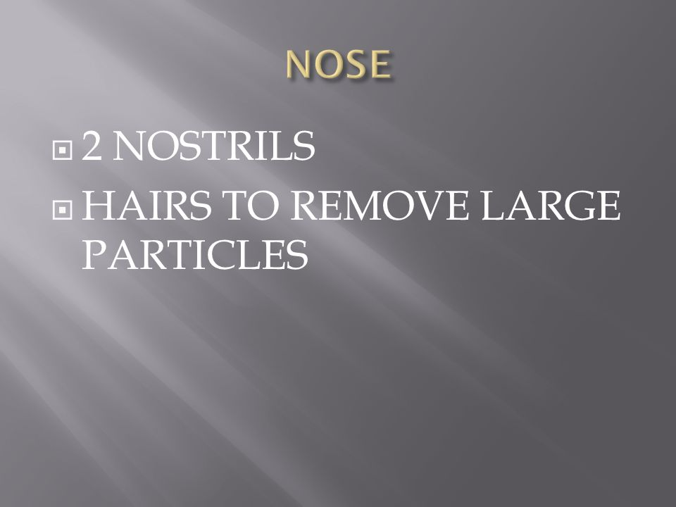 HAIRS TO REMOVE LARGE PARTICLES