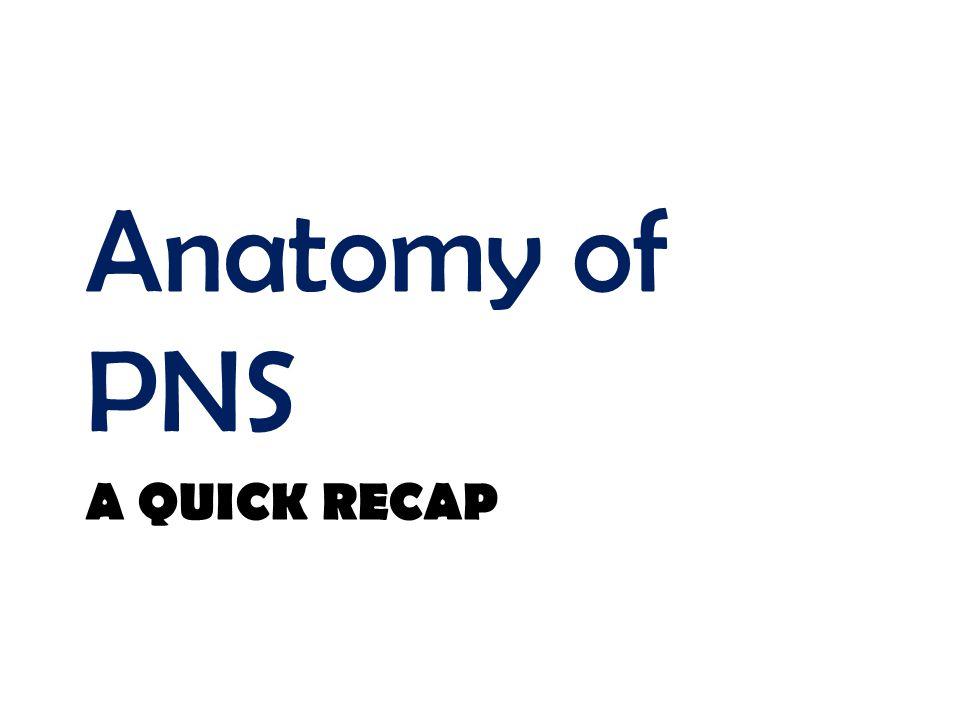 Anatomy of PNS A quick recap