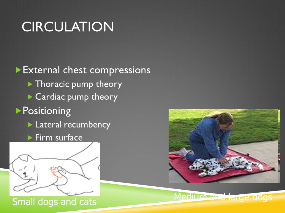 Circulation External chest compressions Positioning