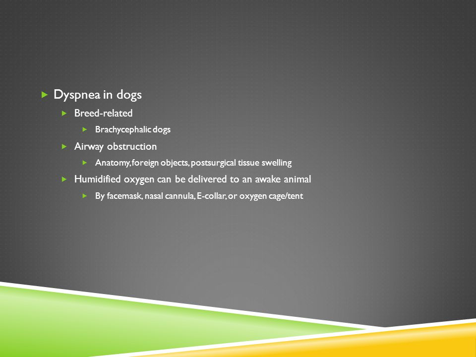 Dyspnea in dogs Breed-related Airway obstruction