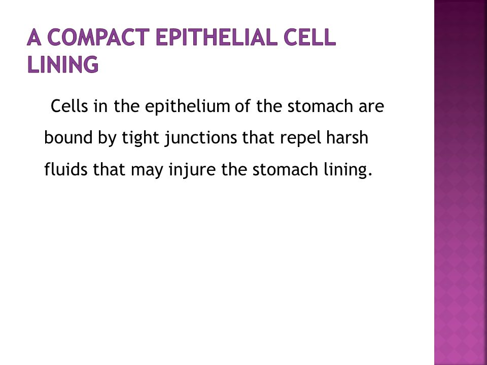A Compact Epithelial Cell Lining