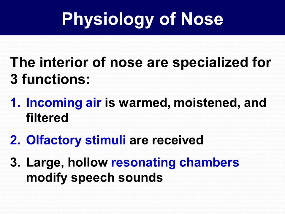 Physiology of Nose The interior of nose are specialized for 3 functions: Incoming air is warmed, moistened, and filtered.