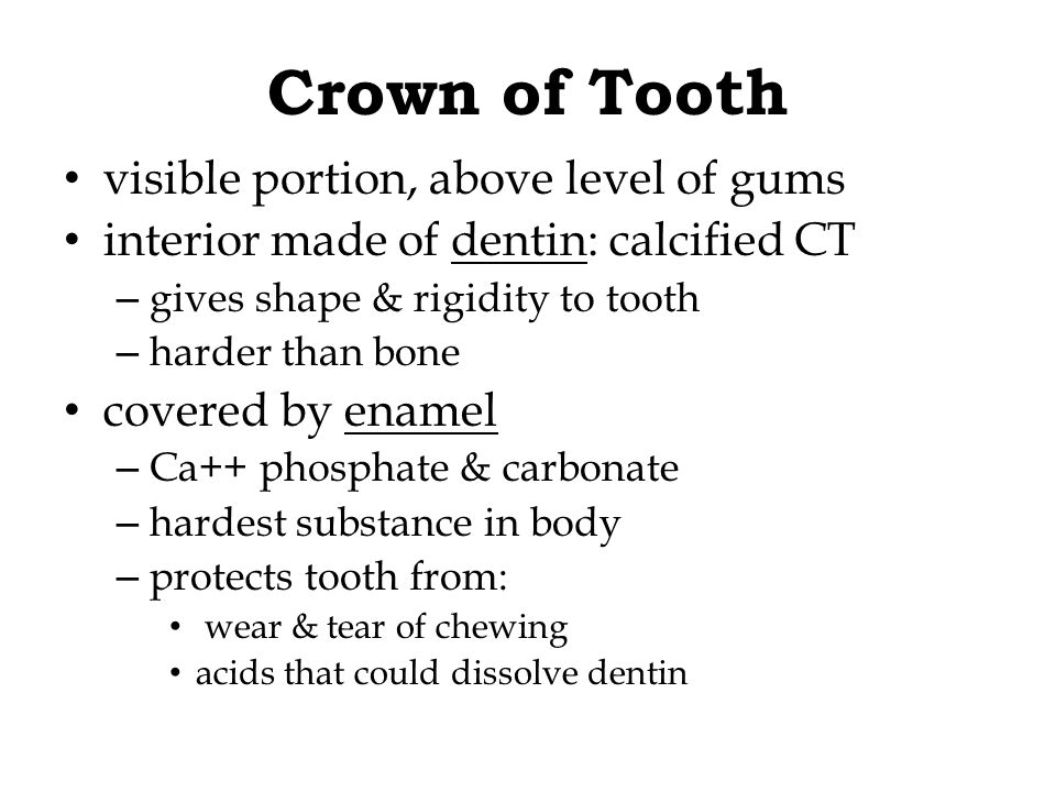 Crown of Tooth visible portion, above level of gums