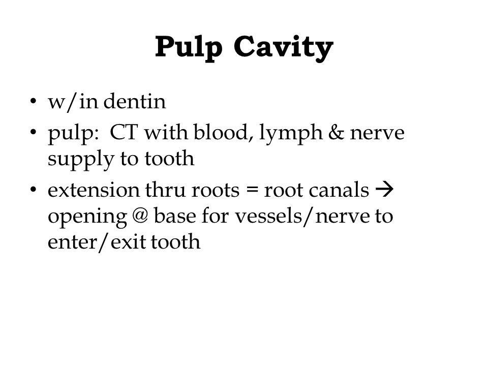 Pulp Cavity w/in dentin