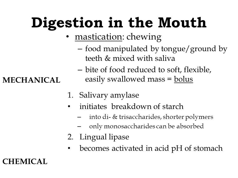 Digestion in the Mouth mastication: chewing