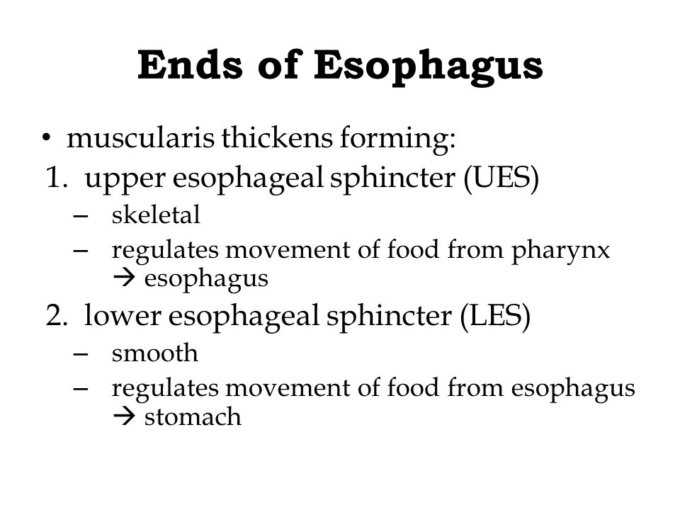 Ends of Esophagus muscularis thickens forming: