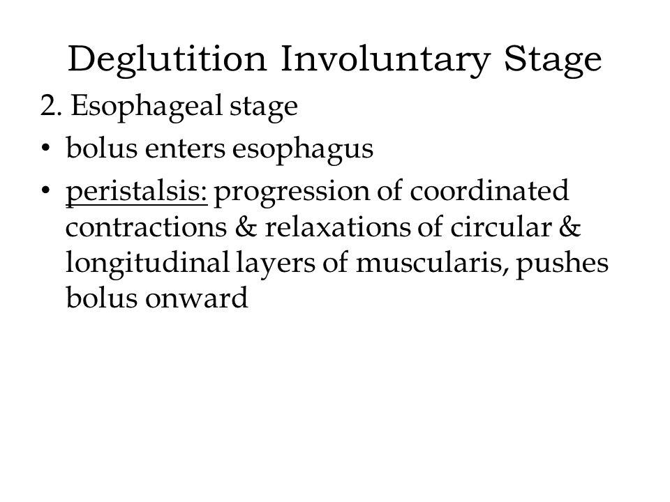 Deglutition Involuntary Stage