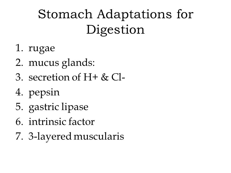 Stomach Adaptations for Digestion