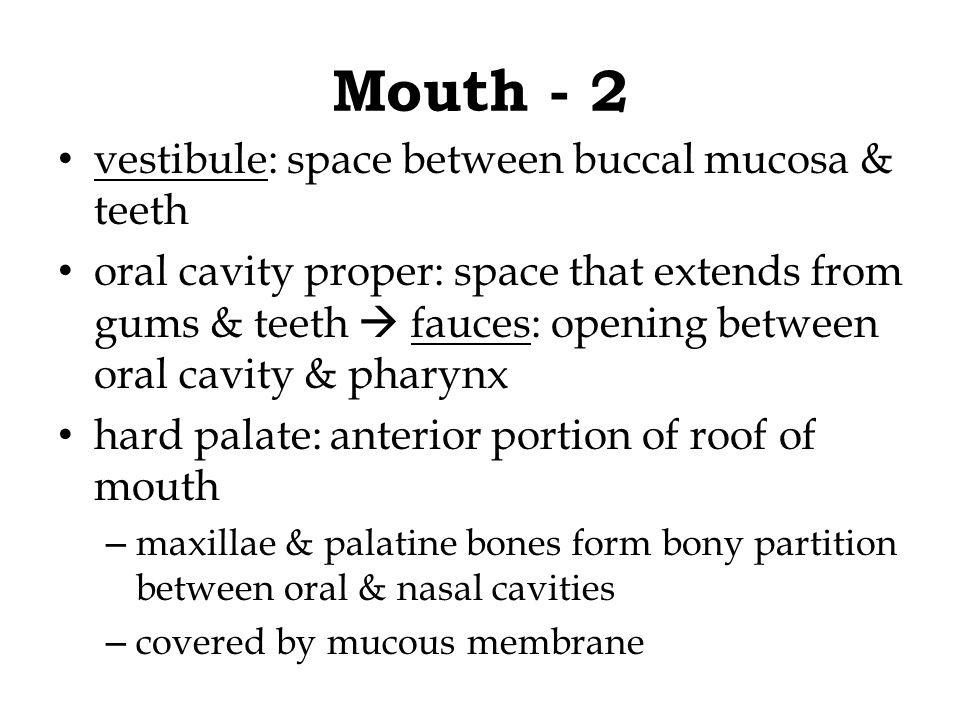 Mouth - 2 vestibule: space between buccal mucosa & teeth