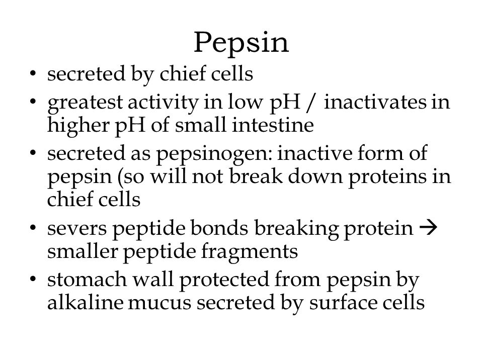 Pepsin secreted by chief cells