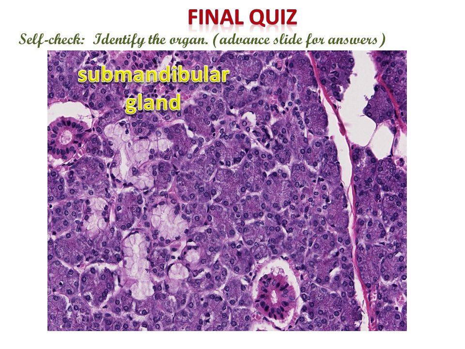 Final quiz submandibular gland