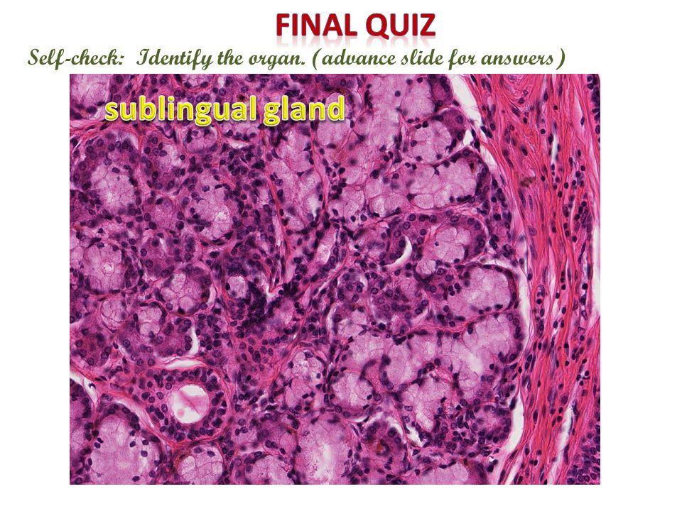 Final quiz sublingual gland