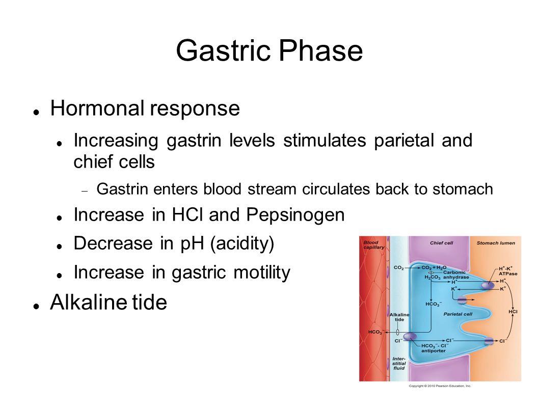 Gastric Phase Hormonal response Alkaline tide