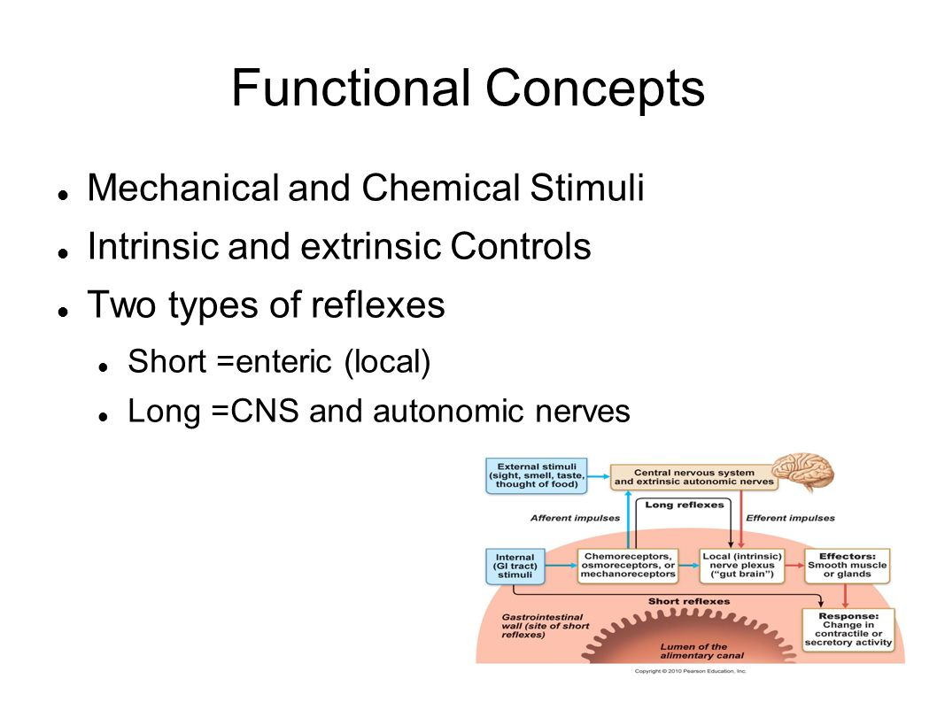 Functional Concepts Mechanical and Chemical Stimuli