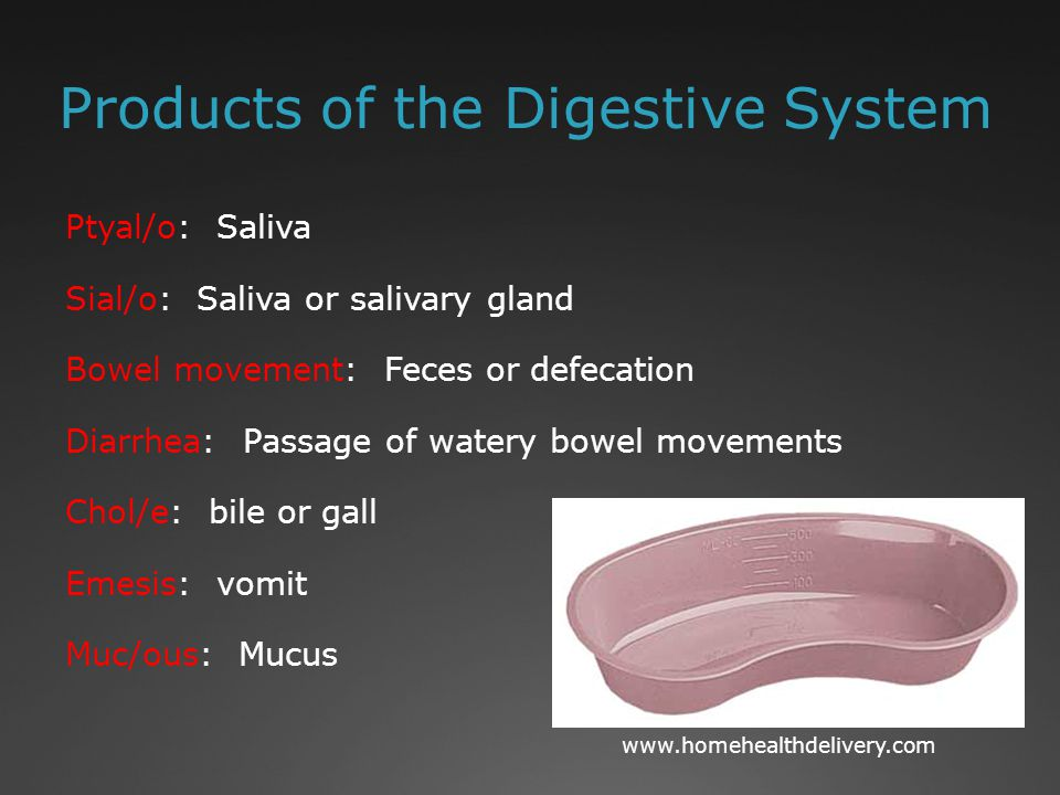 Products of the Digestive System