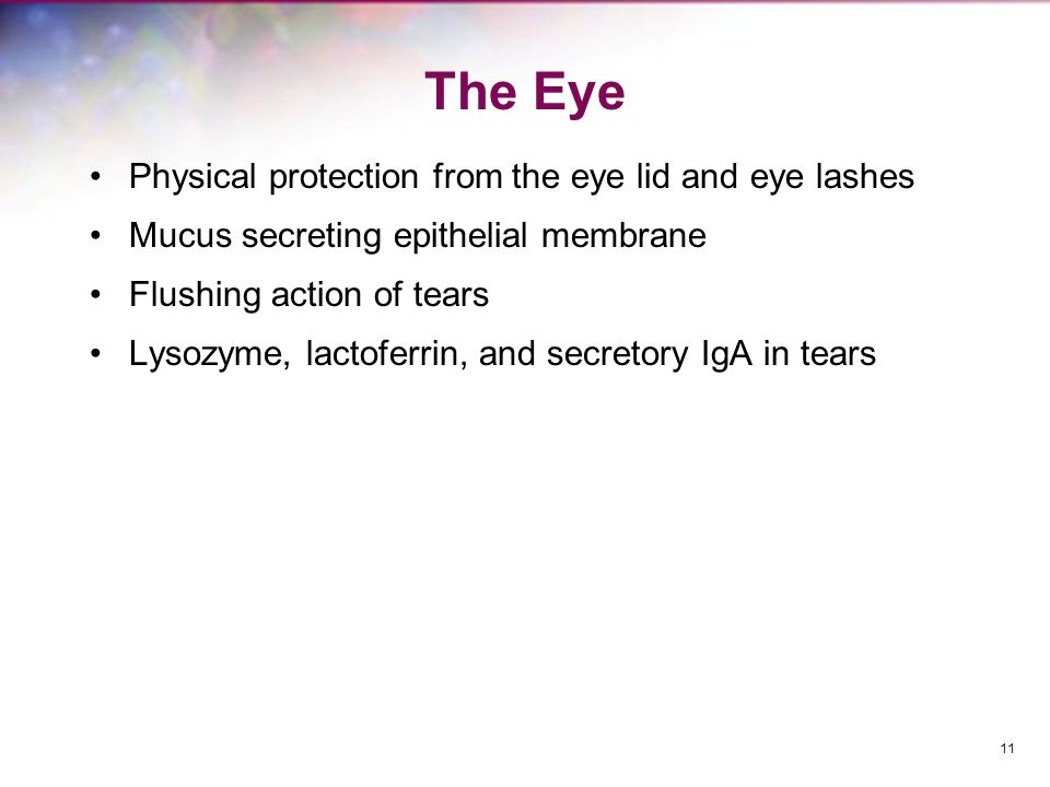 The Eye Physical protection from the eye lid and eye lashes
