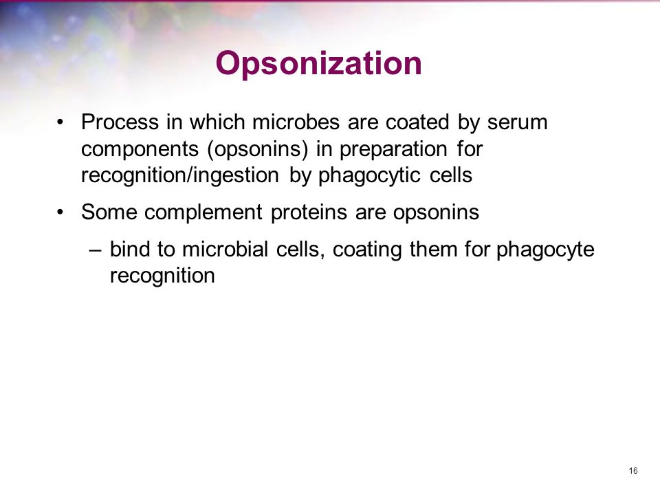 Opsonization Process in which microbes are coated by serum components (opsonins) in preparation for recognition/ingestion by phagocytic cells.