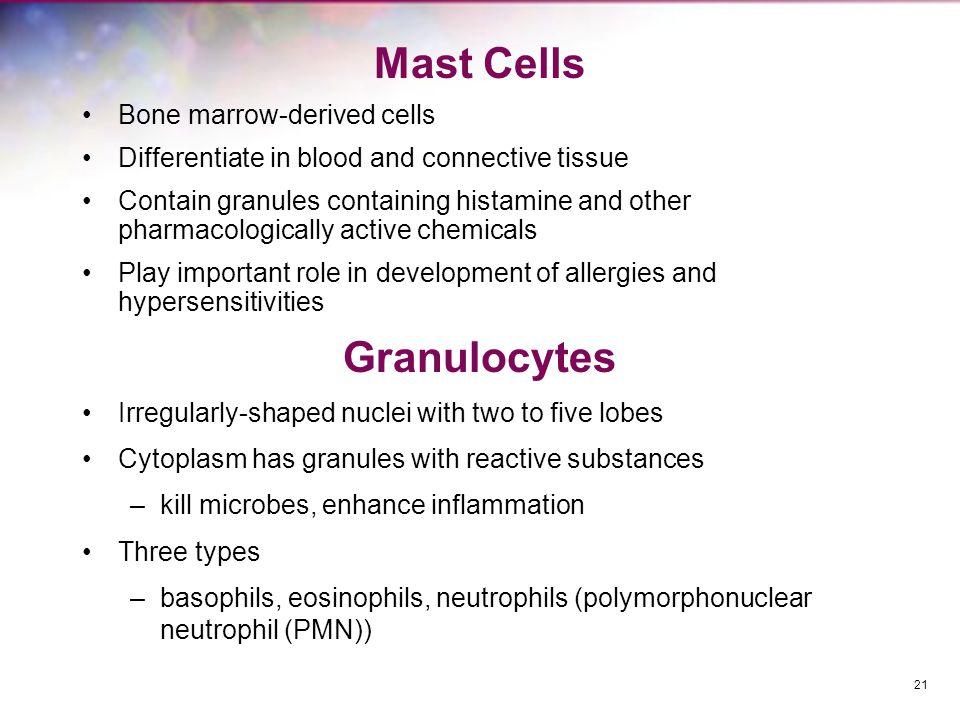 Mast Cells Granulocytes Bone marrow-derived cells
