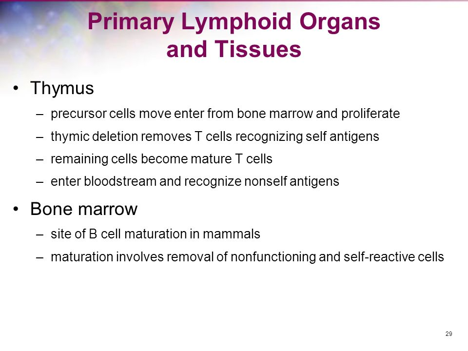 Primary Lymphoid Organs and Tissues