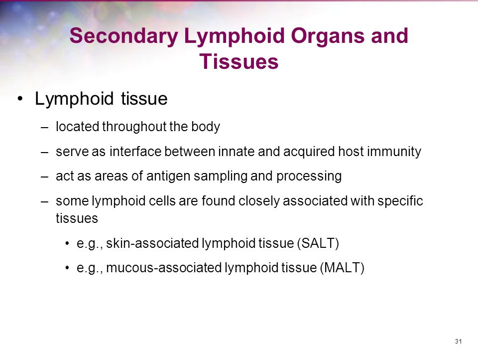 Secondary Lymphoid Organs and Tissues