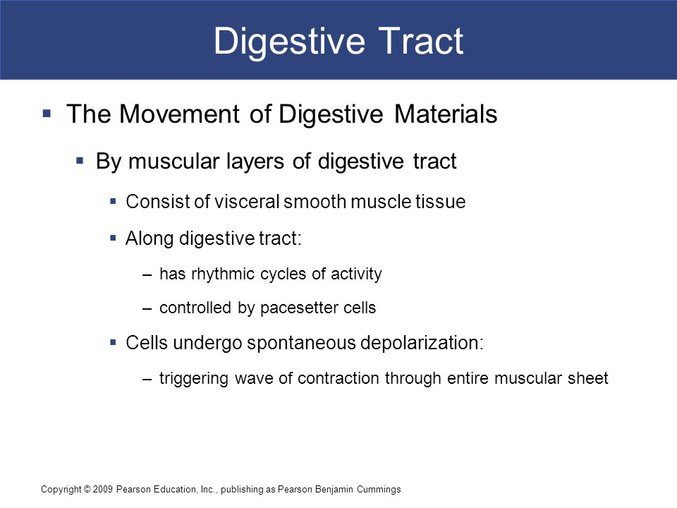 Digestive Tract The Movement of Digestive Materials