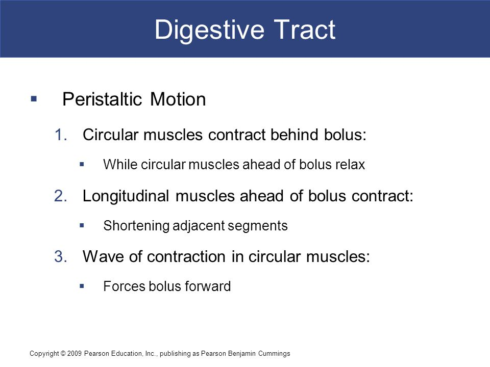 Digestive Tract Peristaltic Motion