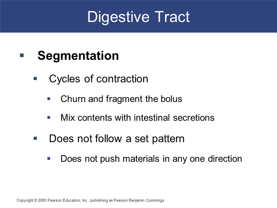 Digestive Tract Segmentation Cycles of contraction
