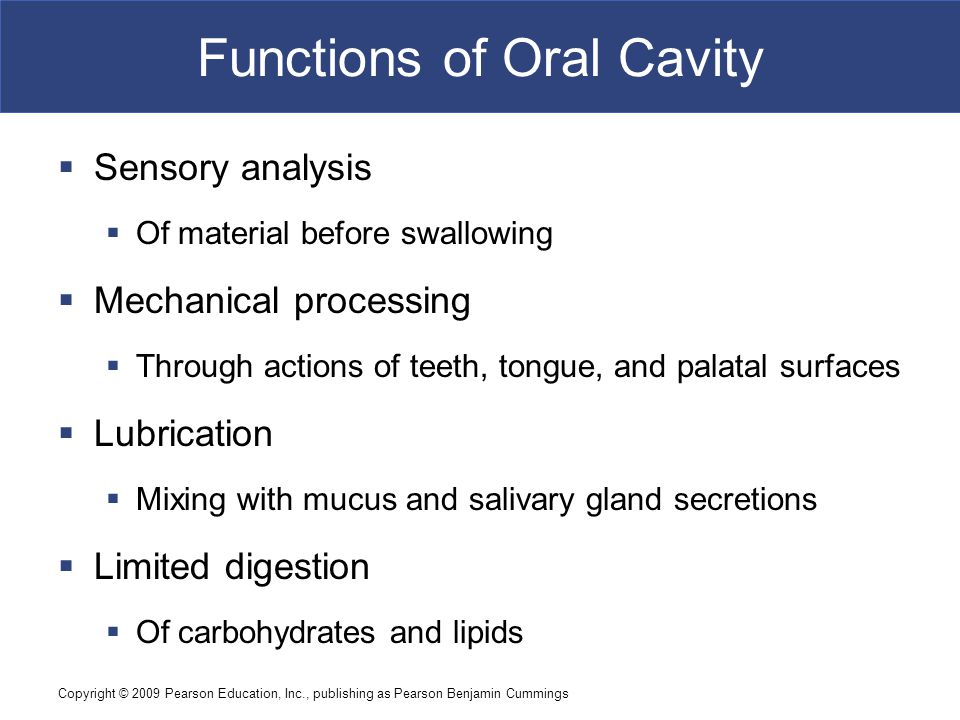 Functions of Oral Cavity