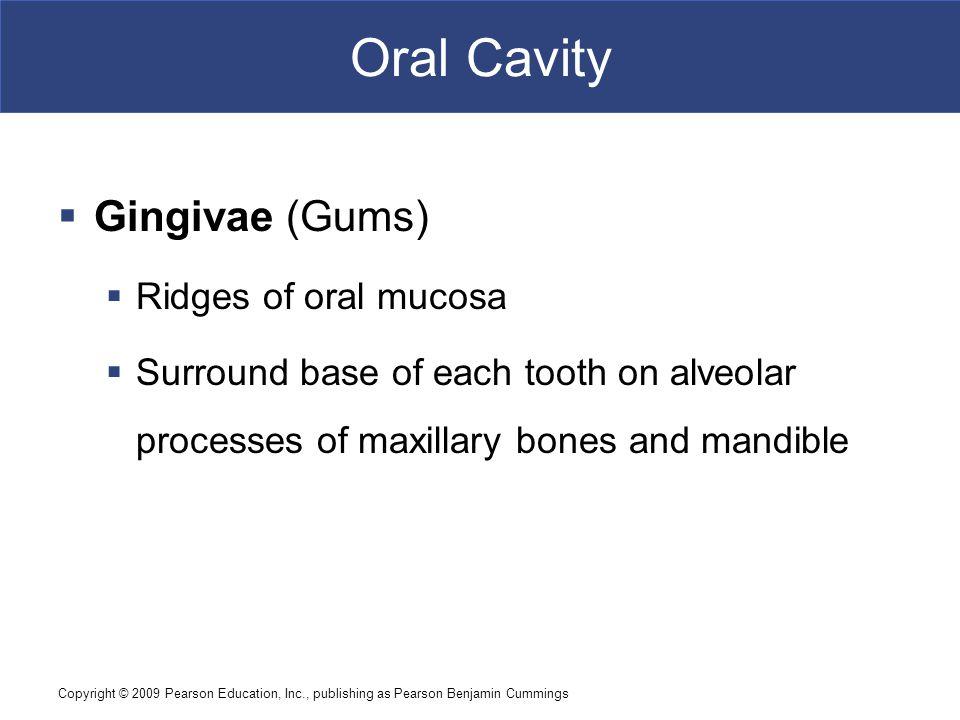 Oral Cavity Gingivae (Gums) Ridges of oral mucosa