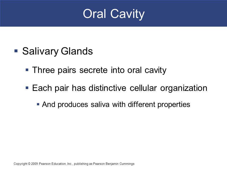 Oral Cavity Salivary Glands Three pairs secrete into oral cavity