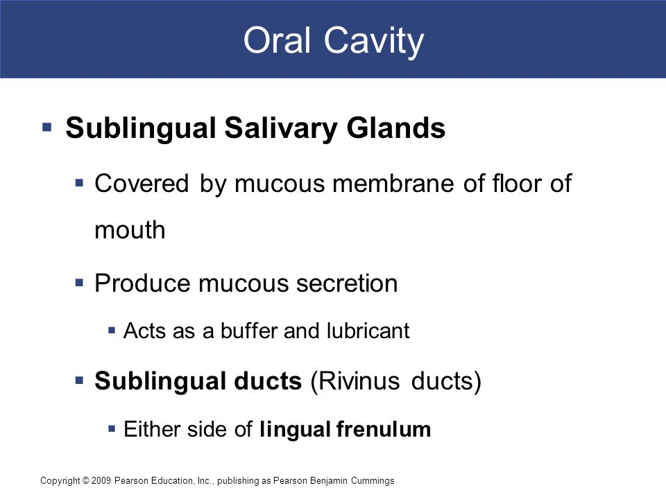 Oral Cavity Sublingual Salivary Glands