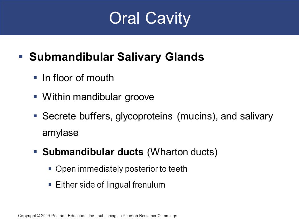 Oral Cavity Submandibular Salivary Glands In floor of mouth