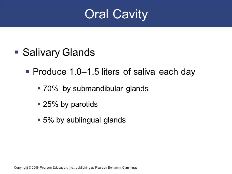Oral Cavity Salivary Glands Produce 1.0–1.5 liters of saliva each day